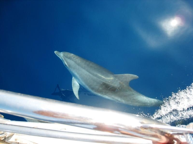 Jachtem wokoło Grecji - delfin - profesjonalny czarter i wynajem
